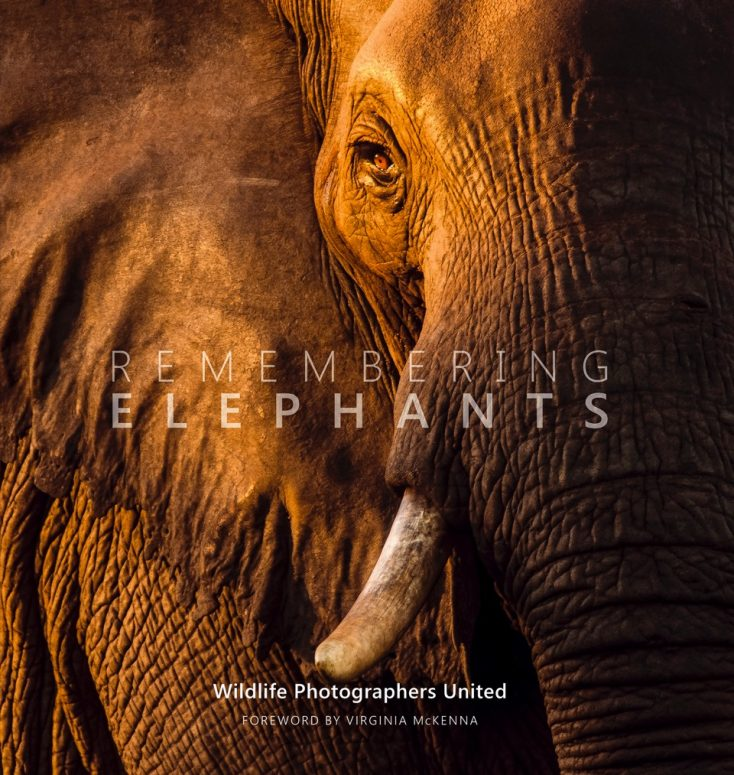 elephants_front-cover-3-copy